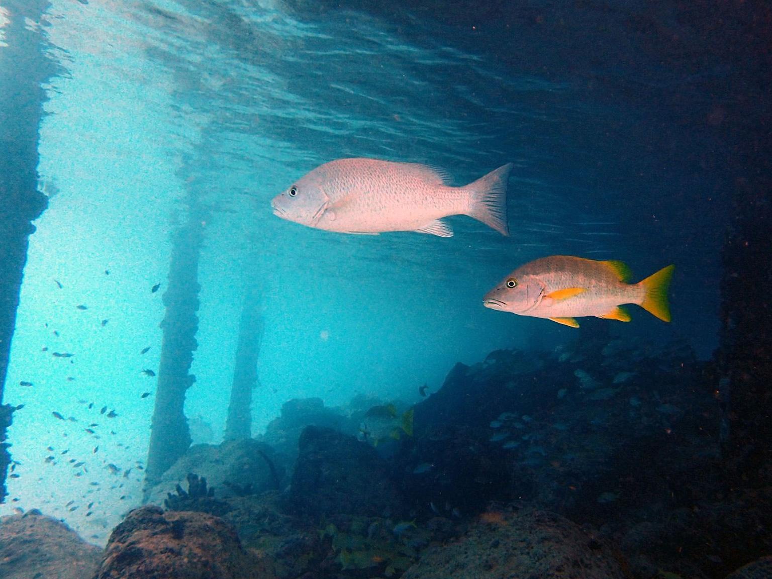 header-bonaire-reef-scientifico